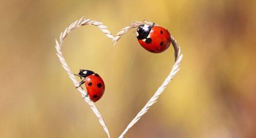 درباره عشق